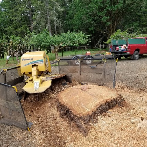 Stump Grinding with All Pro Tree Services