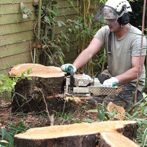 All Pro Stump Grinding