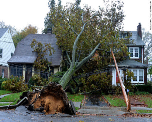 All Pro Tree Services Emergency Tree Service